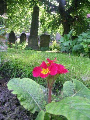 st-cuthberts-cemetery-edinburgh-west-end-scotland_4959295079_o